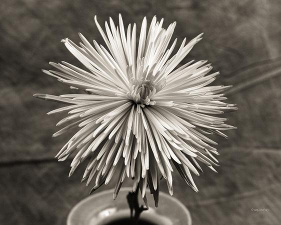 Flora, Flowers, Still Life