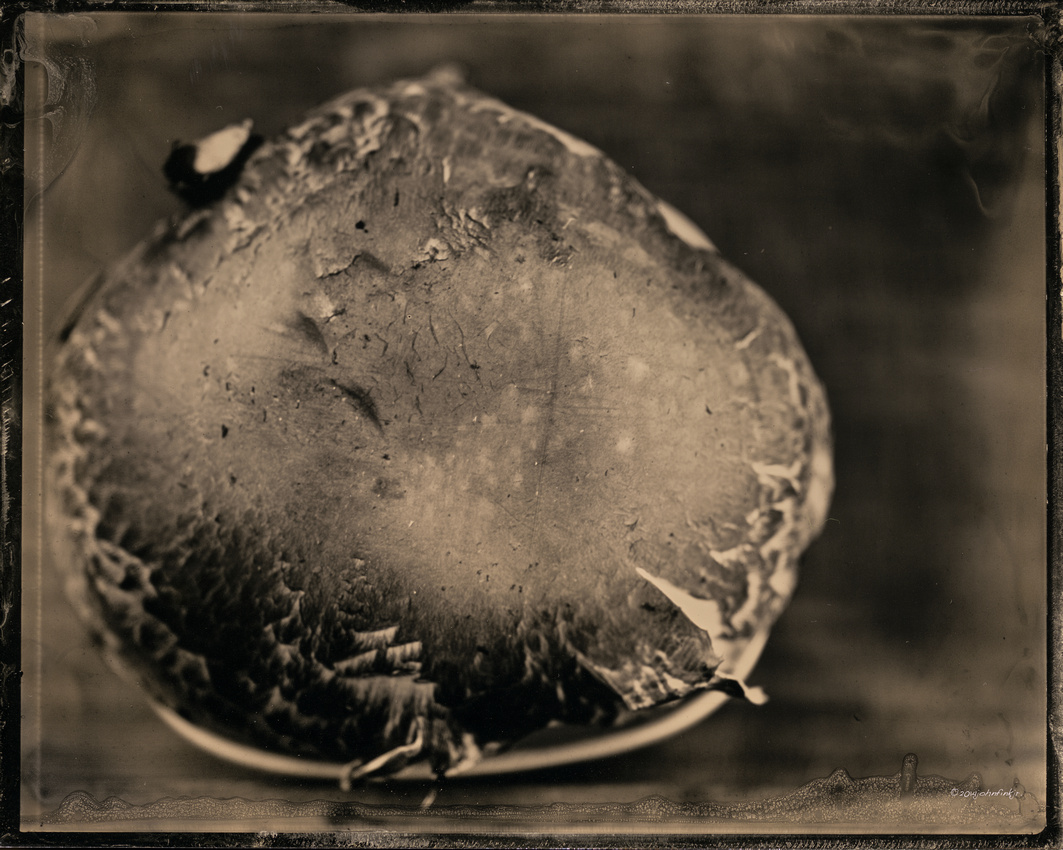 wet plate collodion, portraits, still life, organic matter, tintypes, black aluminum