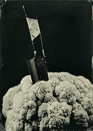 """collodion, wet plate, portraits, still life, organic matter, tintypes, Alumitype"""