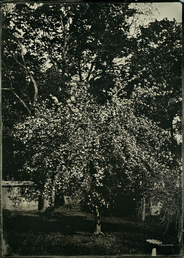 wet plate collodion, landscapes, trees, exterior spaces, exterior structures